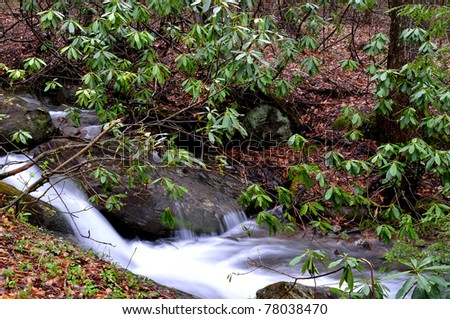 White Oak Run, Brook Trout Stream, Rhododendron, Monongahela National Forest, Webster County, West Virginia, USA