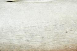White old elephant humerus bone close up