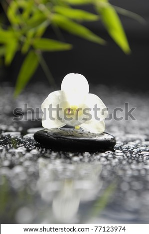 White orchid and stones with green leaves in water drops