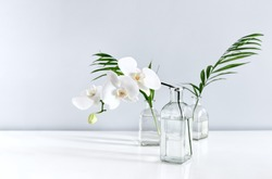 White orchid flower and palm leaves in vases on table top, front view composition with a space for a text