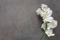 White orchid flower on a gray textured background, space for a text, flat lay, view from above