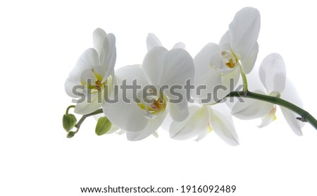 White orchid flower on a white background. Selective focus with copy space. Banner. Wallpaper. Сток-фото ©