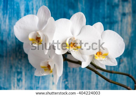White orchid flower on blue wooden background