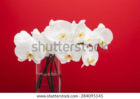 white Orchid flowers with transparent vase and water in the red background at the studio.