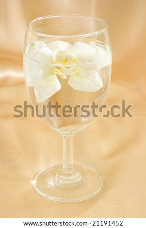 White orchid in the glass with water