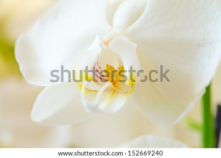 White orchid. Macro image. Very small depth of field.