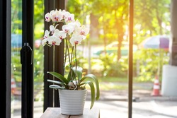 White orchid on wooden table with warm light and nature background.