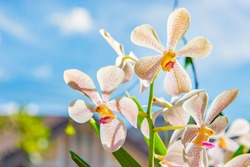 White Orchid with Blue Sky Background