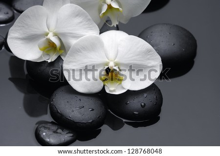 White orchid with stones on wet background