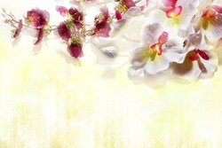white orchids on a pale soft yellow background