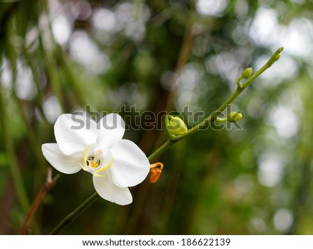 white orchids under natural lighting with romantic bokeh background