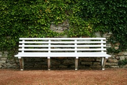 white park bench with stone wall and green leaves of the ivy in quiet environment