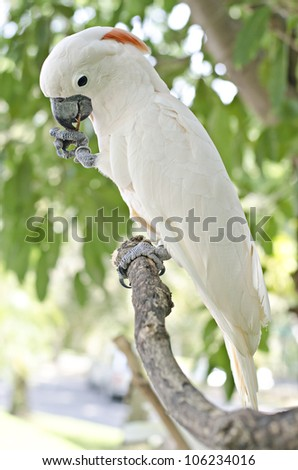 white parrot eating a walnut