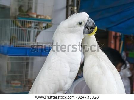 white parrots in garden