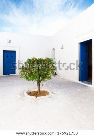 White patio with blue doors and green tree