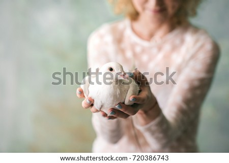 white peace dove in hands of a woman #720386743