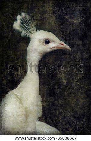 White peacock on grunge textured canvas - stock photo
