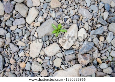 White pebbles of rock on the beach, a single green plant broke through the rocks. Symbol of perseverance and vitality.