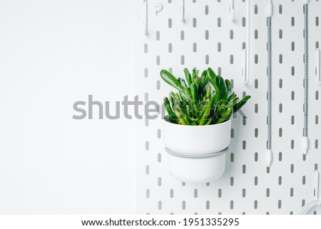 White pegboard texture background. White metal wall board, writing panel. Green crassula in a white pot on white pegboard. Home design. Decoration. Home office. Magnetic board. Stock photo ©