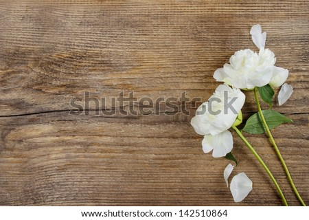 White peonies on wooden background. Copy space.