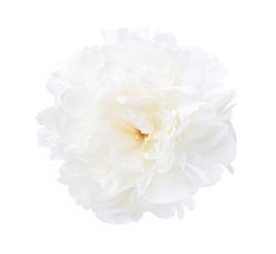 White  peony isolated on white background. Close-up