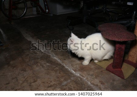 White Persian cat is standing on cat house and ready to jump to left side, left copy space #1407025964