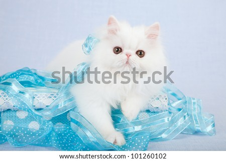 White Persian kitten with blue polka dot gift box and ribbons on blue background