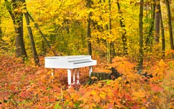 White piano in autumn forest