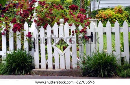 stock photo : White picket fence fends off the overflow of red roses blooming in this