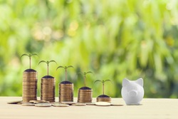White piggy bank with green sprout on rows of increasing coins on wood table. Financial, growth business investment concept: Stock investment for dividend and capital gain in a long-term growth