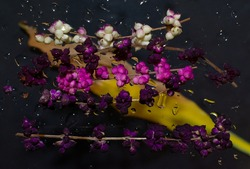 White, pink and purple flowers on a glass sprinkled with water drops above a yellow leaf on a black background