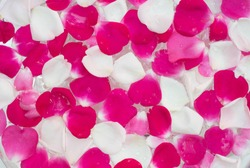 white, pink, red rose flowerpetals  in water closeup
