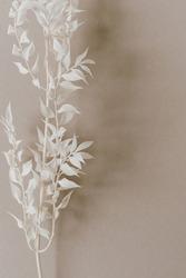 White plant branch on neutral pastel beige background. Minimal stylish still life floral composition.