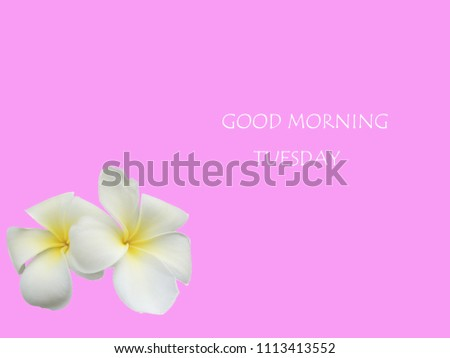 white plumeria flowers with good morning tuesday are on pink background. tuesday concept #1113413552