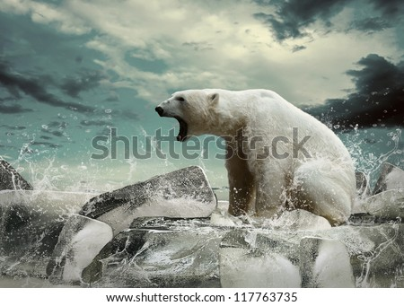stock photo white polar bear hunter on the ice in water drops 117763735 - Каталог — Фотообои «Животные»