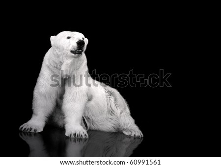 White Polar Bear Hunter - sitting