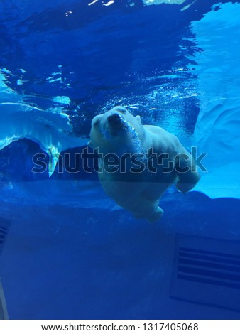 White Polar Bear Swimming in a large pool viewed from an underwater tunnel as the large beast moves gracefully through the water with ease Bubbles pouring from its snout as it exhales