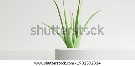 White product display podium with aloe vera leaf on white background. 3D rendering Stockfoto ©