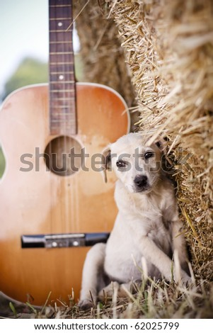 White puppy in country setting