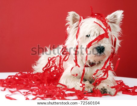 White puppy with christmas garland.