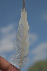 white quill like feather shot against sky