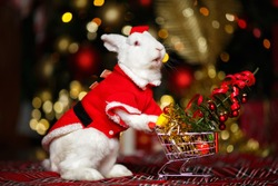 White Rabbit. Hare and Christmas. Funny bunny. Santa Claus in animals.