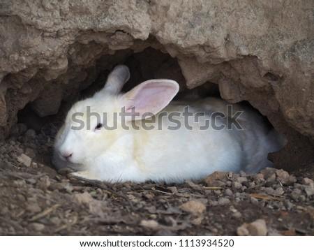 White Rabbit in a Burrow