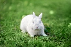 white rabbit in the nature