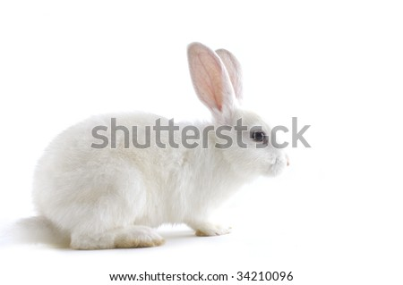 white rabbit isolated against white - stock photo