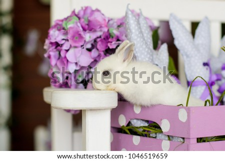 white rabbit on pink wooden box