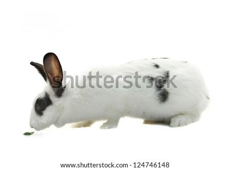 white rabbit on white background - stock photo