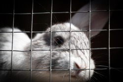 White rabbit with big brown eyes behind bars looking out