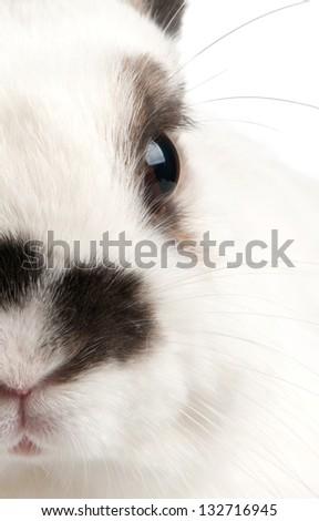 white rabbit with blask spots #132716945