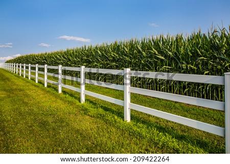 White rail fence leading along cornfield and deep blue sky.